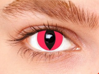 Lentilles Red Cat
