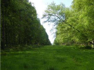 Les ballades en forêt