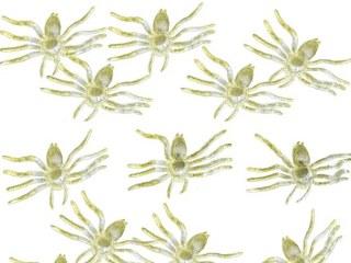 Araignée phosphorescentes