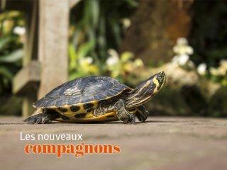 reptiles jardiland la ravoire