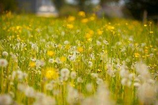 Concours Villes, Villages et Maisons fleuris 2015