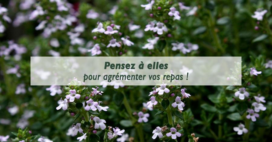 conseils-entretien-plantes-aromatiques-frontignan-les-serres-du-mas-reboul