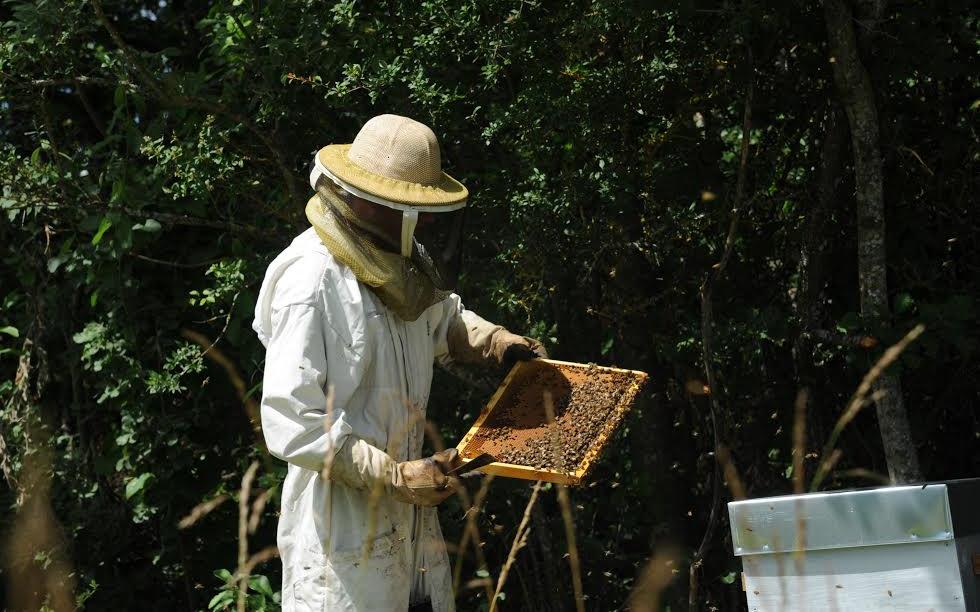 L'apiculteur