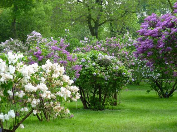 Arbustes a fleurs jardiland la ravoire jardinerie la - Arbuste a fleurs jaunes ...