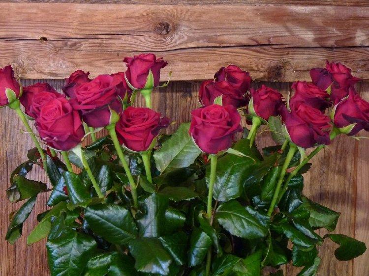 fleurs coupées - roses rouges