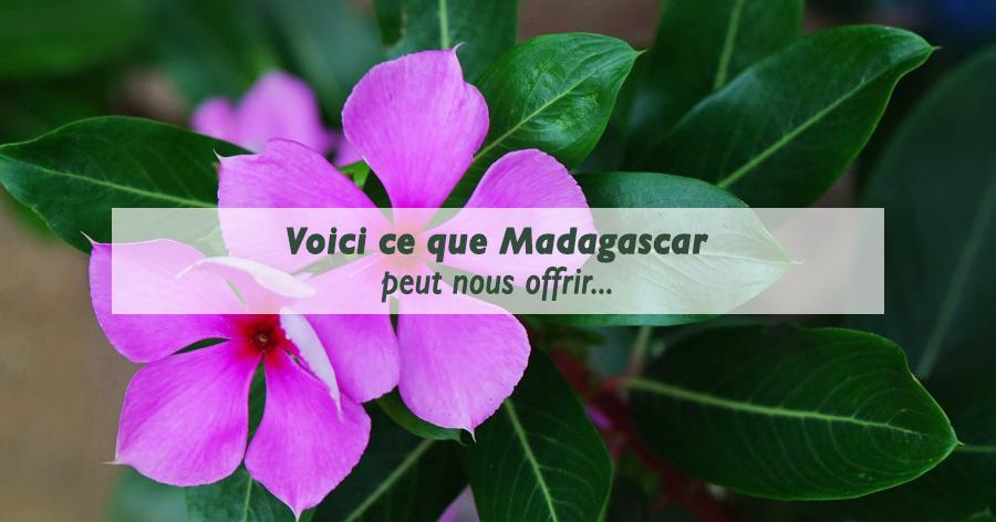pervenches-madagascar-blog-serres-du-mas-reboul