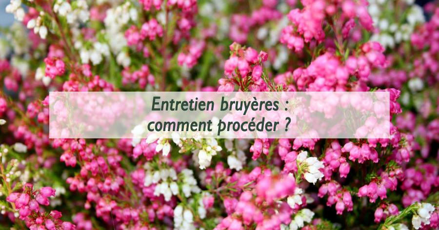 entretien-bruyeres-jardinerie-frontignan