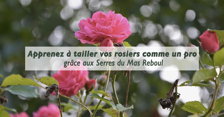 Tailler ses rosiers - Les Serres du Mas Reboul