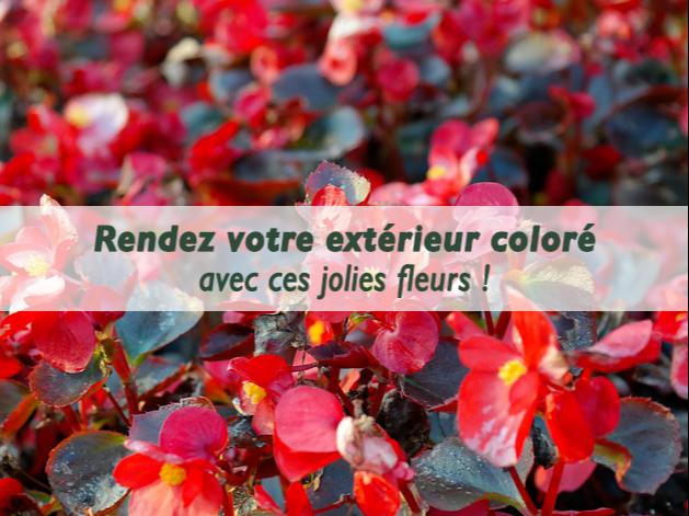 entretien-begonias-serres-du-mas-reboul
