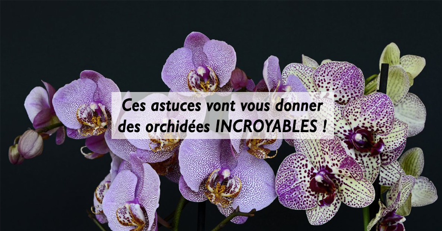 entretenir-ses-orchidees-jardinerie-frontignan