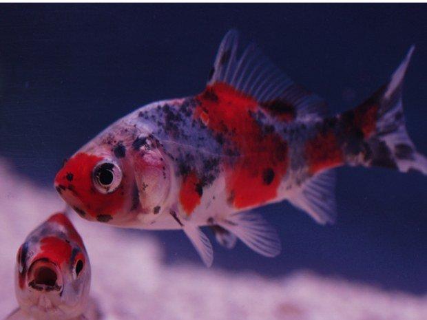 vente_poissons_de_bassin_avignon