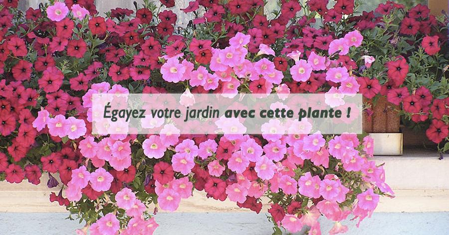 Égayez son jardin avec les Surfinia