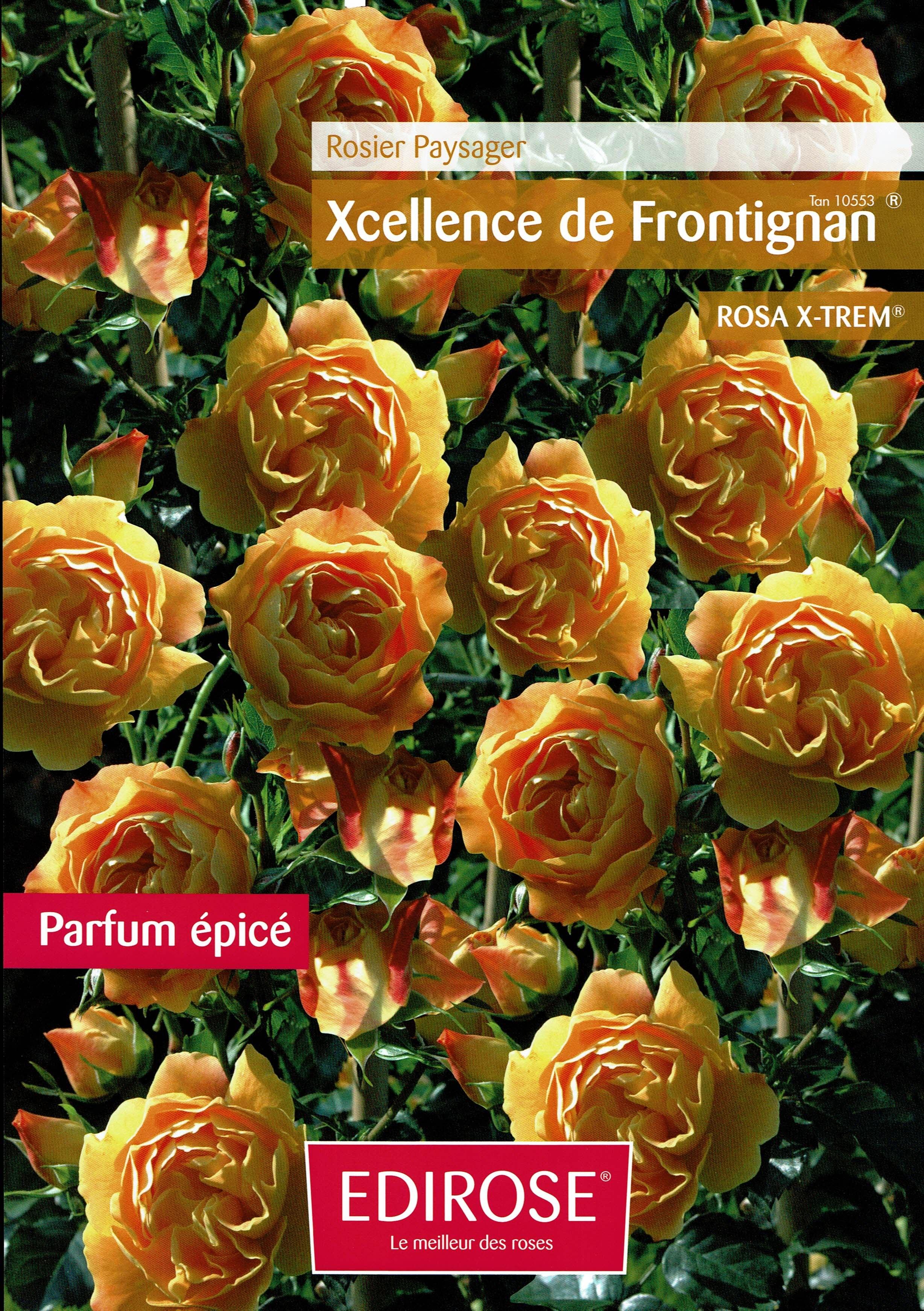 Excellence de Frontignan-fiche