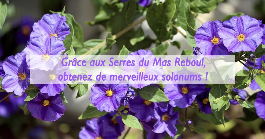 entretien-solanum-jardinerie-frontignan-serres-du-mas-reboul