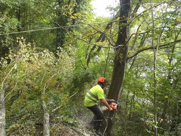 Abattage d'arbres par démontage