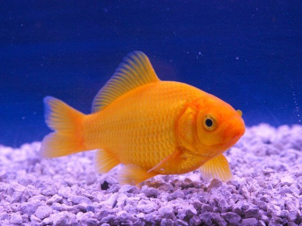 vente-poissons-bassin-84