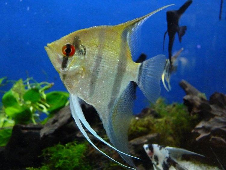 Aquarium - poisson
