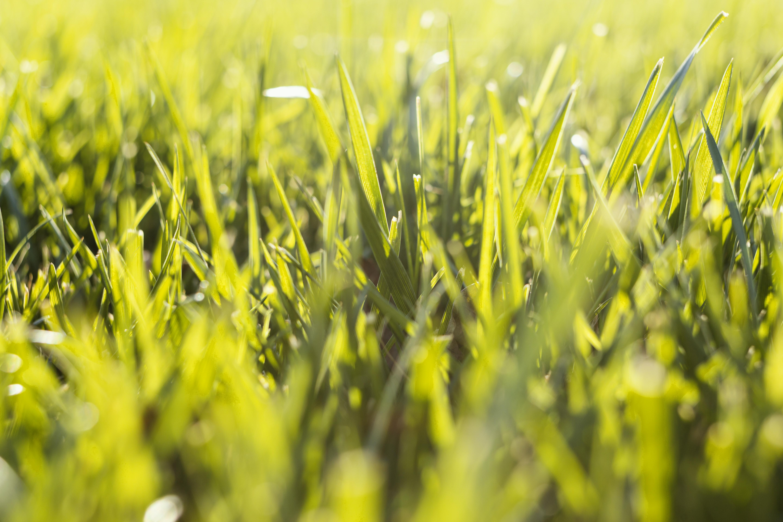natural-grass-close-up