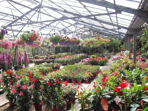 Plantes Frontignan